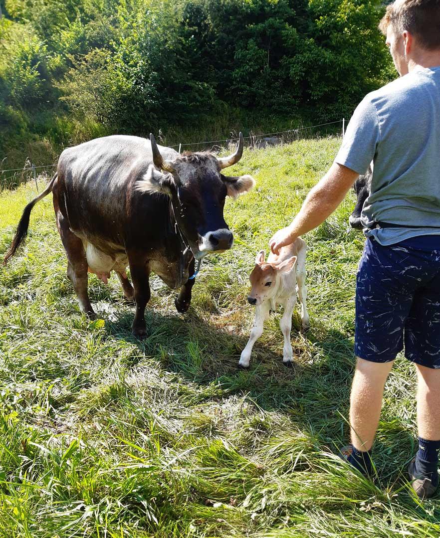 vacca mas la grisota val dei mocheni formaggi e salumi