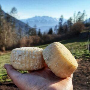 tomini formaggio trentino